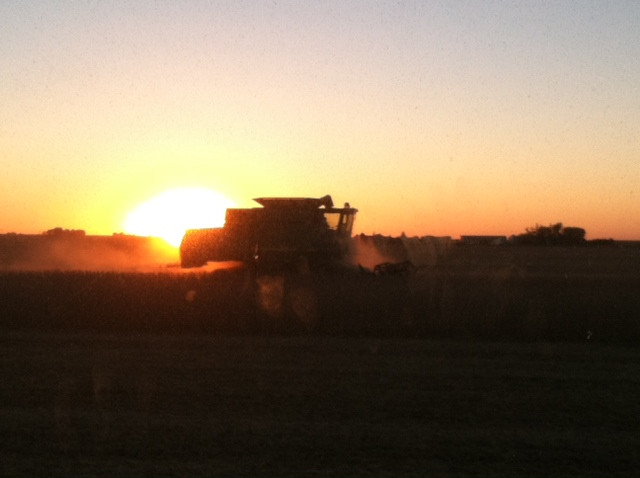 Soybeans are harvested in Livingston County last year / CIFN file photo.