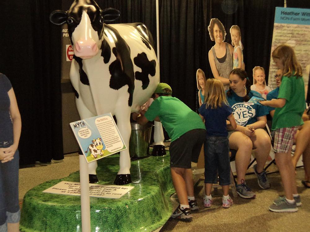 Visitors to the McLean Co. Fair milk a cow / CIFN photo.