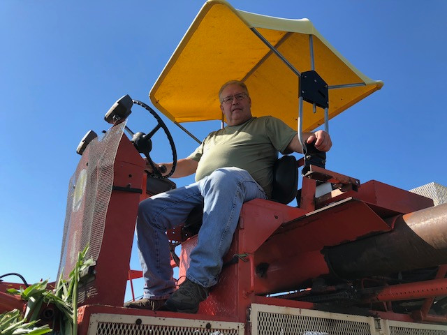 Dennis Roeschley works in an area seed corn field this month / CIFN photo.