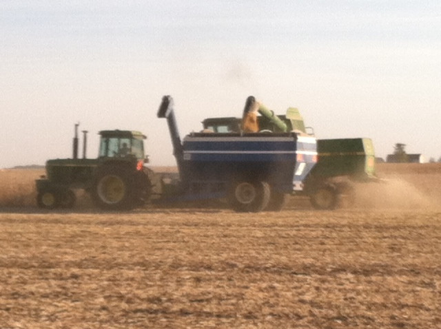 A farmer combines beans in Livingston County Monday afternoon / CIFN photo.