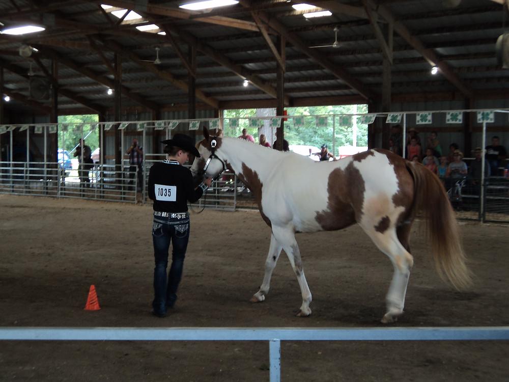 Monday's horse show at the Livingston County Fair / CIFN photo.