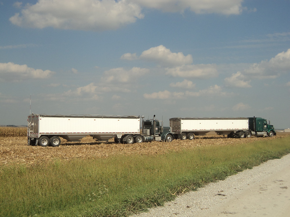 Trucks wait to be loaded in a corn field south of Sibley in Ford County last week / CIFN photo.