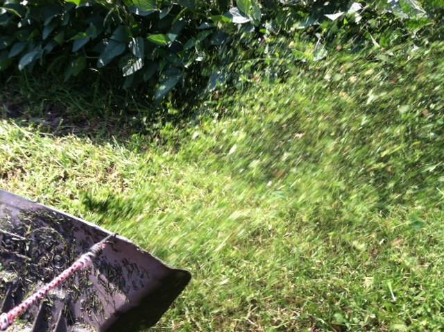 A lawn mower throws grass along an area bean field / CIFN photo.