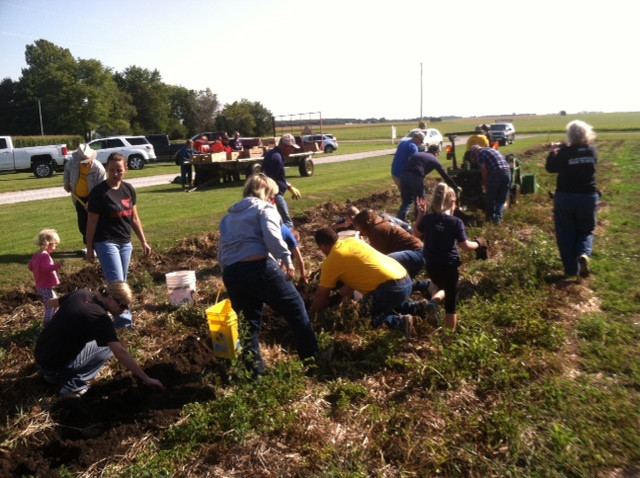 Members of Immanuel Lutheran Church of Colfax harvest potatoes on a farm near Fairbury Sunday / CIFN photo.