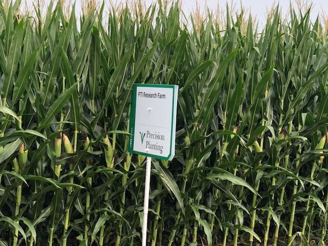 A cornfield shown near Pontiac Monday morning / CIFN photo.