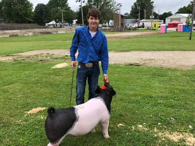 Ty Drach gets ready to show at the Ford County Fair this week / CIFN photo.