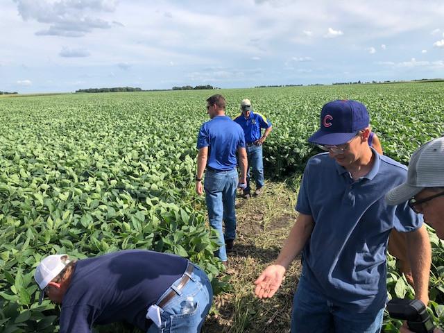 Local farmers examine a soybean/cover crop field near Chatsworth last week / CIFN photo.