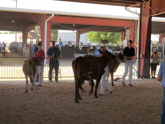 Last year's McLean County Fair is shown at the Interstate Center in Bloomington / CIFN photo.