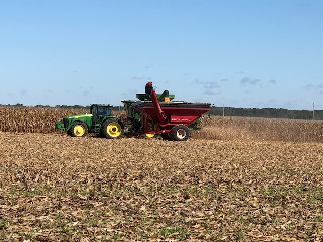 Corn is harvested in Livingston County Monday afternoon / CIFN photo.
