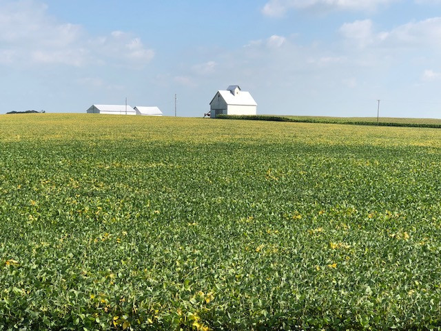 A soybean field is shown north of Pontiac Monday afternoon / CIFN photo.