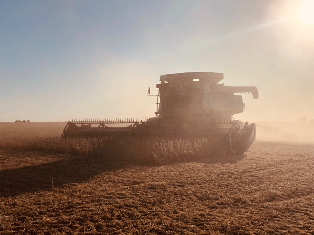 A farmer harvests soybeans in McLean County last year / CIFN file photo.