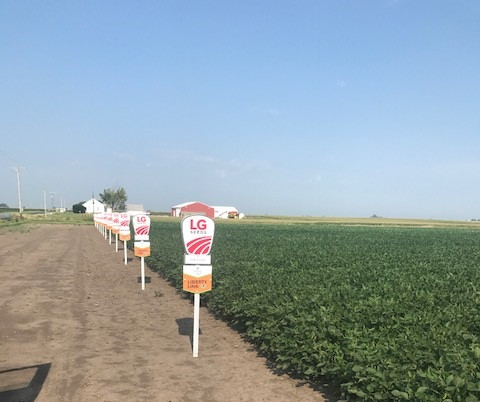 Photo courtesy of Bryan Lessen, LG Seeds / for the CIFN.