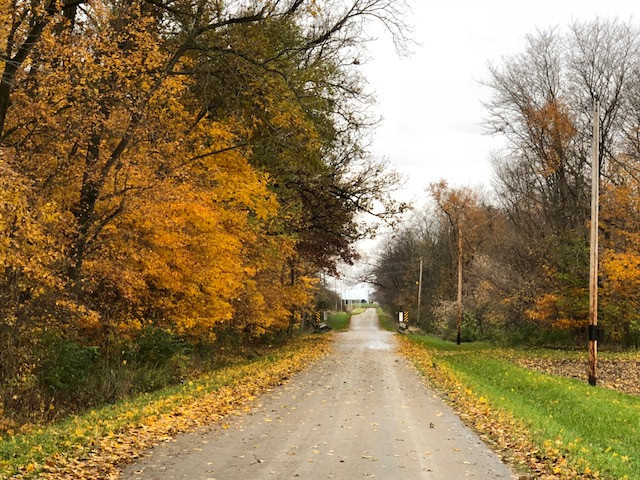 Fall leaves spotted in Livingston County last week / CIFN photo.