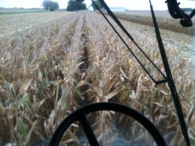 Kent's combine view last week / CIFN photo.