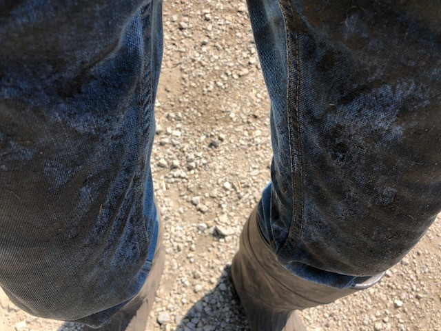 Kent's muddy jeans from power washing farm equipment / CIFN photo.