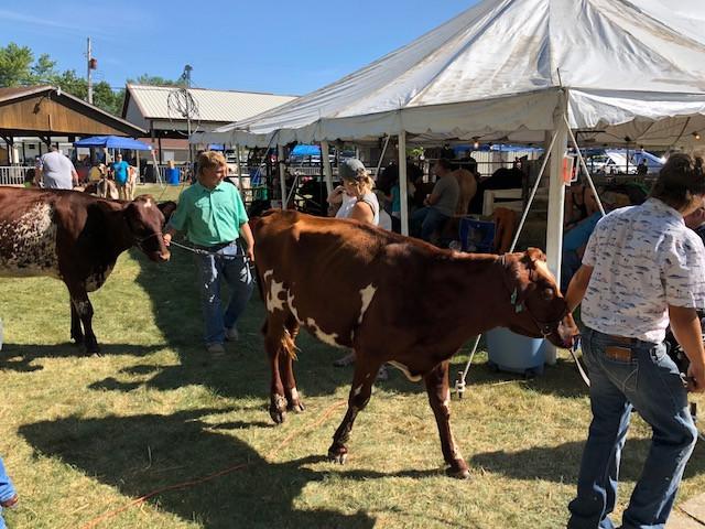 The dairy show Friday morning at the Cullom Jr. Fair / CIFN photo.