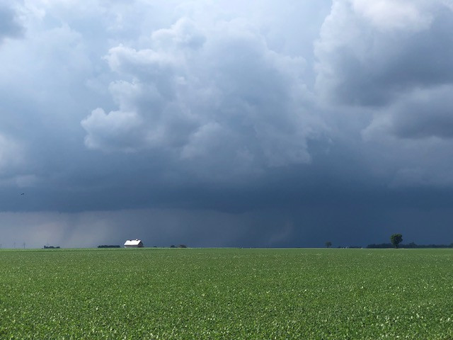 Rain clouds are shown over a Livingston County bean field last Sunday / CIFN photo.