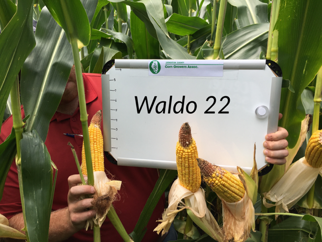 Corn is shown in Waldo Township of Livingston County / LCCGA photo.