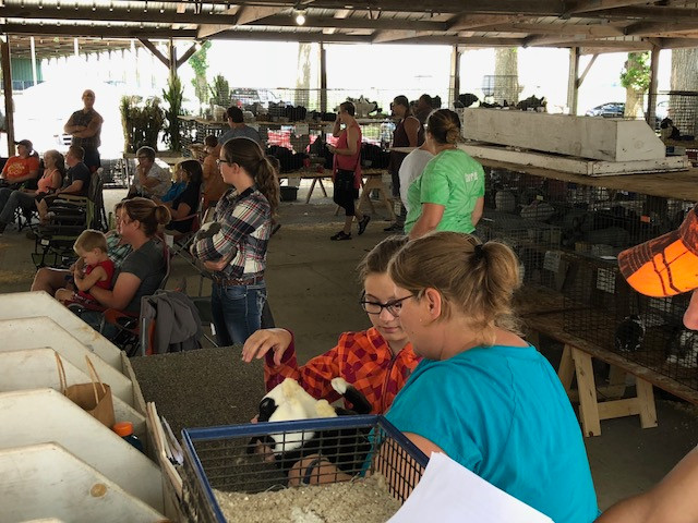 Judging takes place at the Livingston County Ag Fair on Wednesday / CIFN photo.