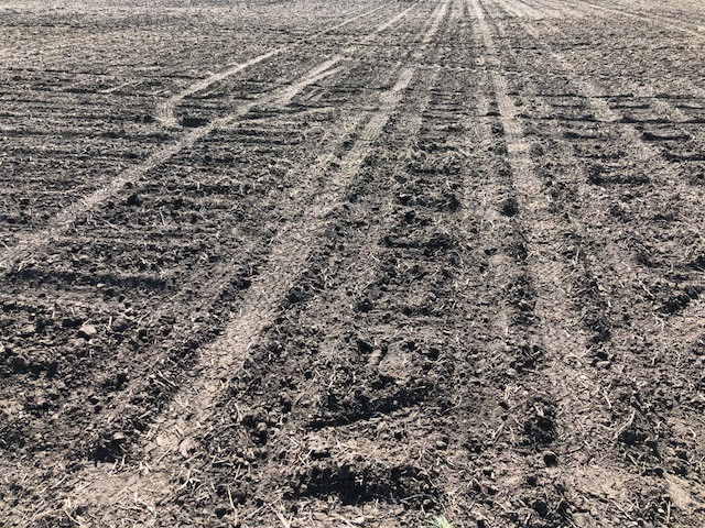 A planted field is shown in Central Illinois last week / CIFN photo.