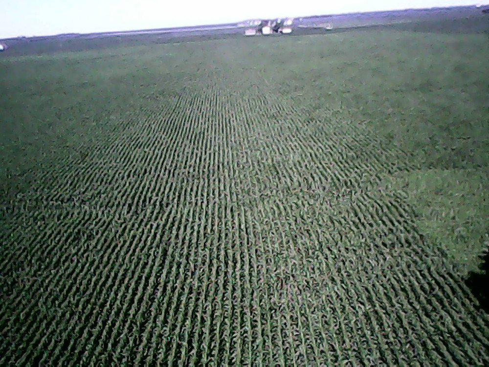 An aerial view of a cornfield starting to tassel in Livingston County Monday / CIFN photo.