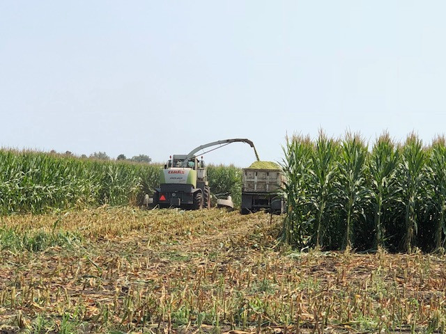 The Kilgus family chops corn silage south of Fairbury last week / CIFN photo.
