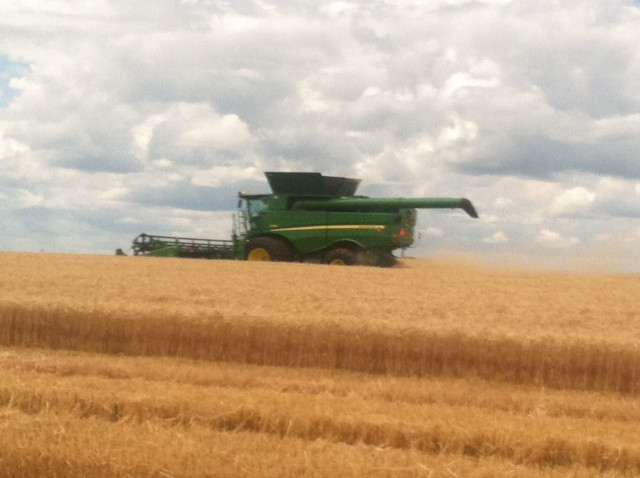 A farmer harvests wheat near Melvin in Ford County Monday afternoon / CIFN photo