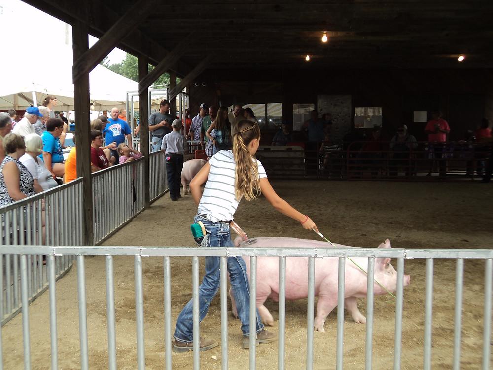 The Friday hog show at the Cullom Jr. Fair / CIFN photo.