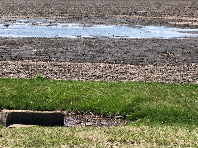 A wet field is shown in McLean County Monday afternoon / CIFN photo.