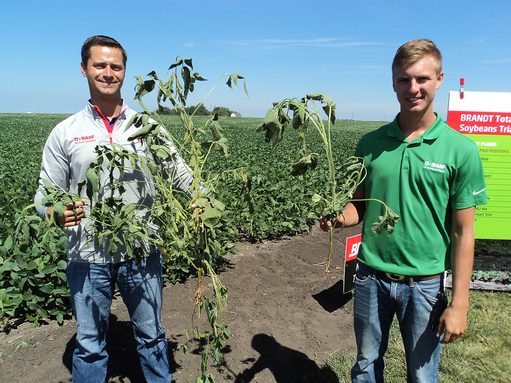 A.J. Woodyard with BASF (left) holds soybeans which were planted Feb. 19 at a research location near Seymour, IL / CIFN photo.