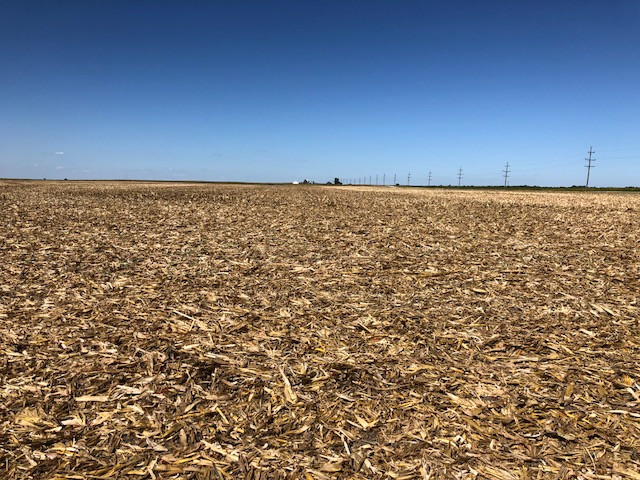 Kent's view of a harvested cornfield last week / CIFN photo.