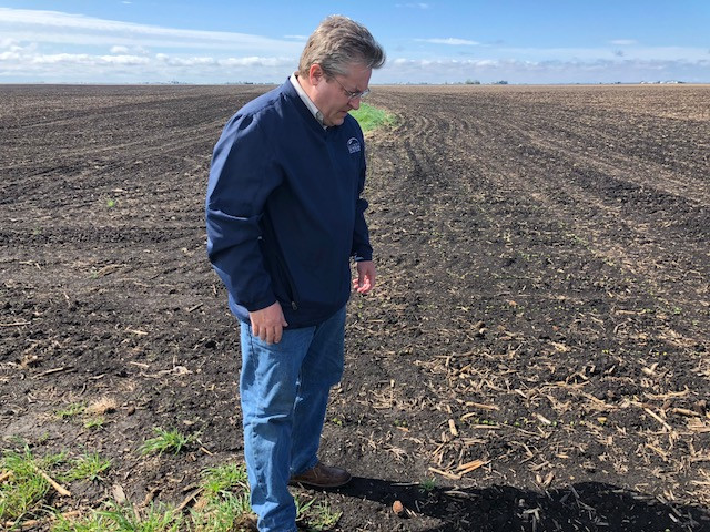 Grower Jim Martin, who also serves as a director for the Illinois Soybean Association, examines early planted soybeans in LaSalle County Friday morning / CIFN photo.