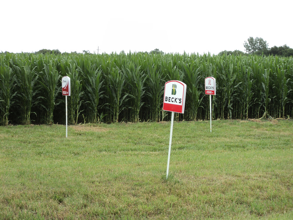 The Beck's Hybrids plot is shown south of McDowell in Livingston County recently / CIFN photo.