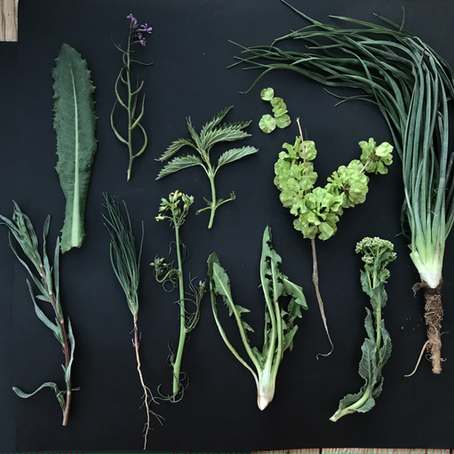 Foraging for Wild Edibles, Rethinking Weeds, Honoring        the Flora of the San Luis Valley
