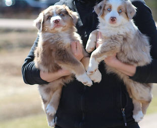 Person Holding Puppies