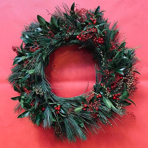 Christmas Ilex