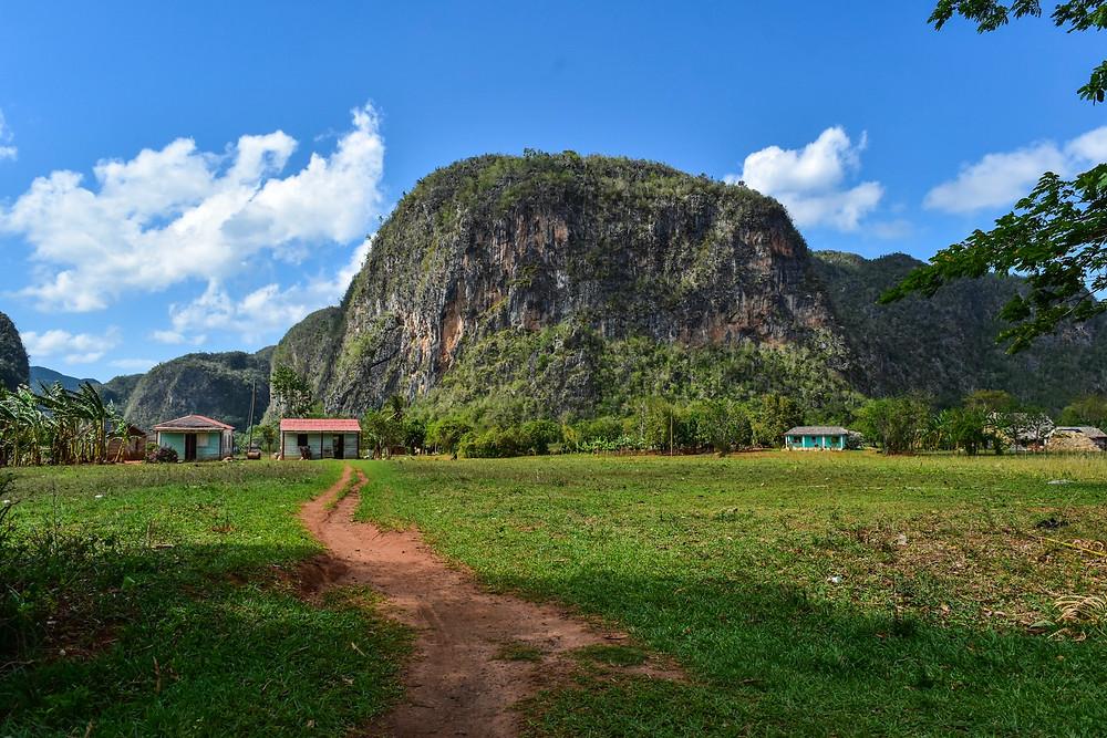 Magotes in Vinales valley, Cuba