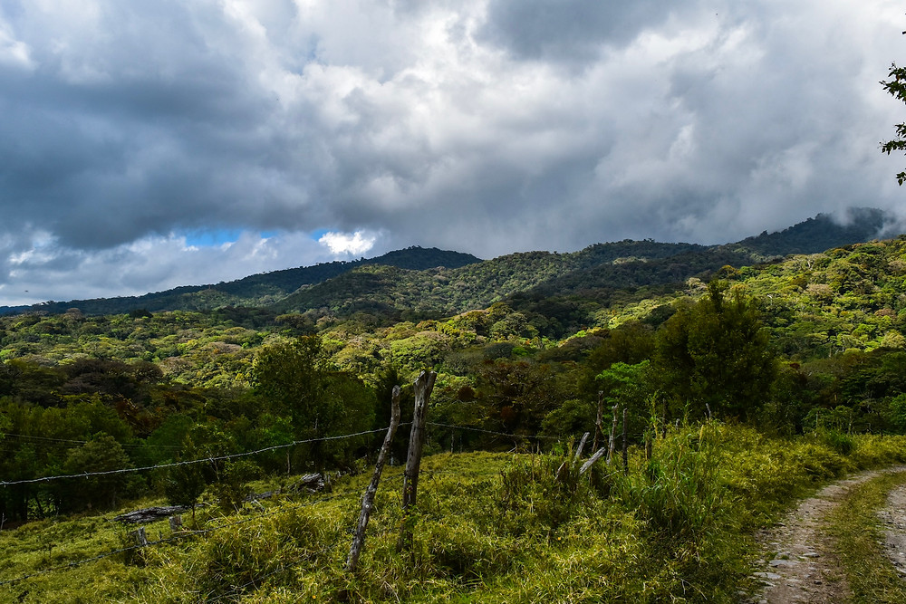 Monterverde cloud forest