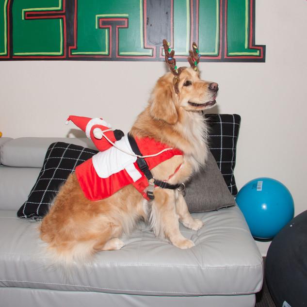ChristmasParty2019-7186.jpg
