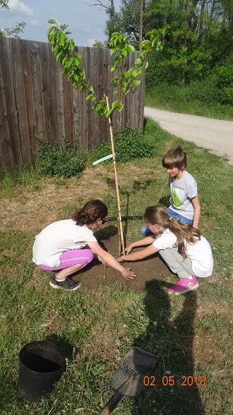 Montessori-Schule-Marchegg_Baum2.jpg