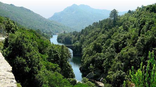 forêt sampolo.jpg