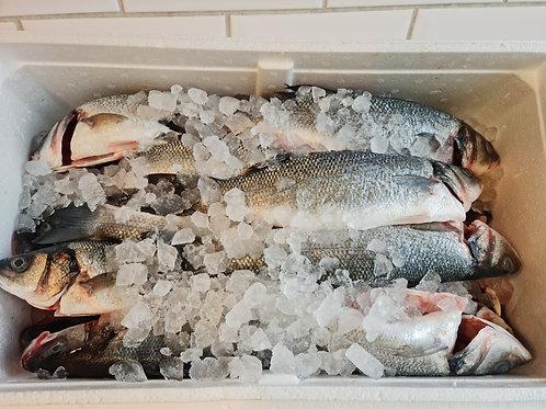 Sea Bass (x4)