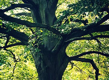 Abundance - Through The Law of Nature