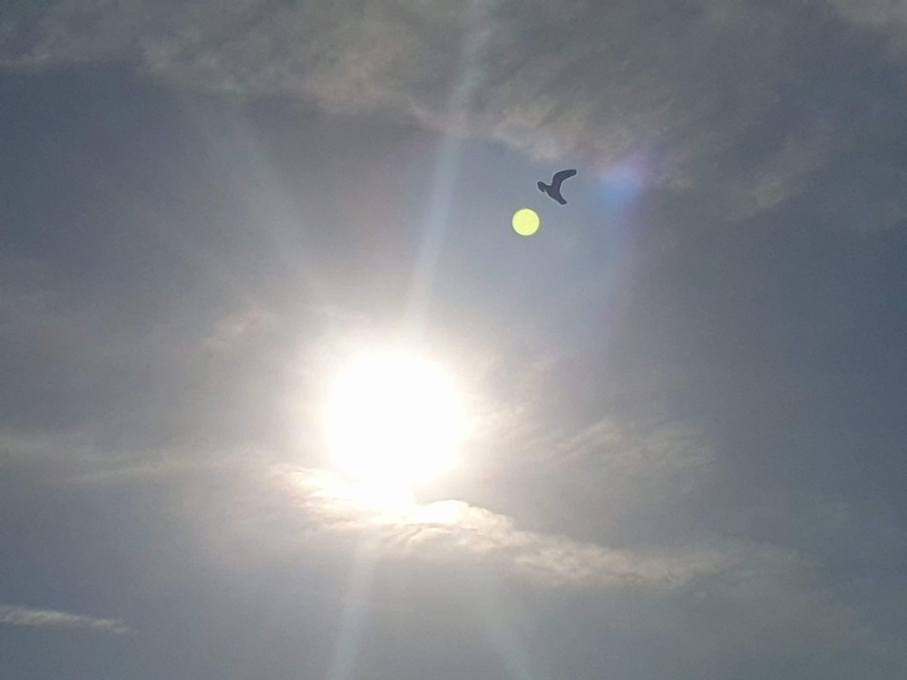 In my photograph a Yellow Orb is captured, Light-beings from a higher dimension & bird flying over