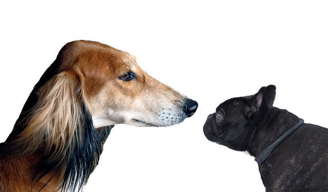 單憑狗的外貌便可知道牠的性格?