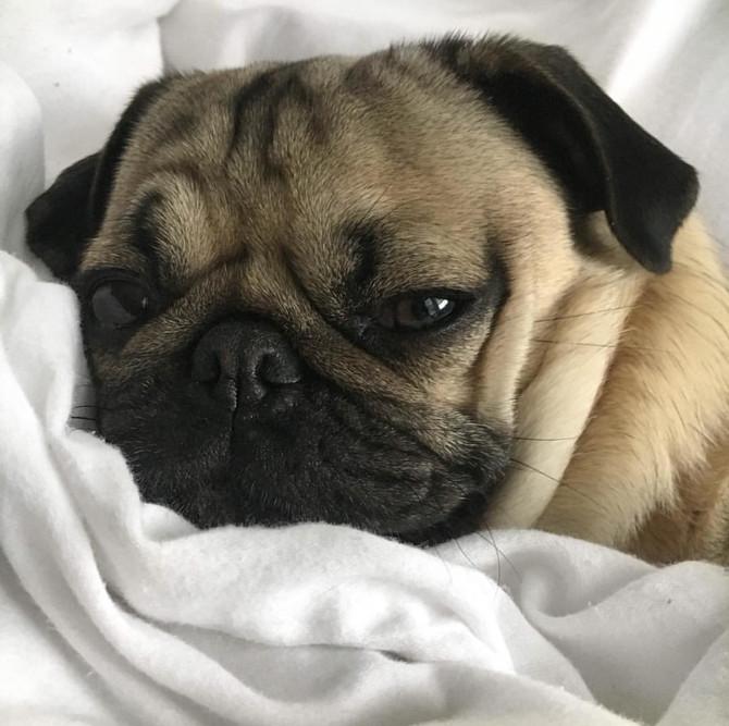 狗狗預防針究竟是預防什麼?