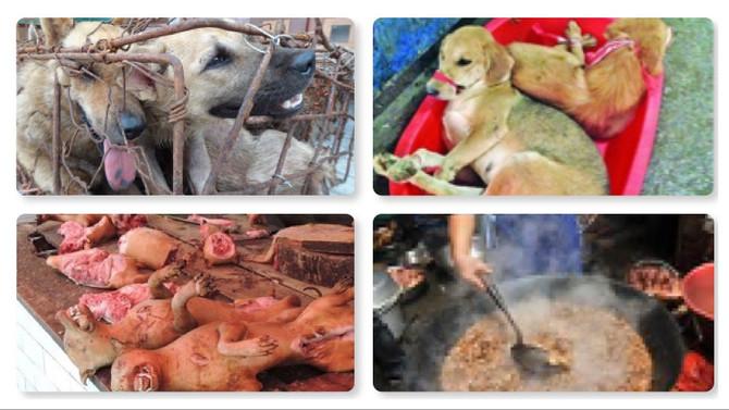 玉林狗肉節將至,身在香港的我們可以做甚麼?