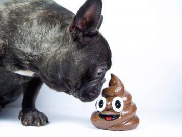 吃便便的狗