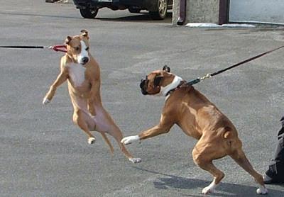 狗狗散步最愛的活動是:吠狗!