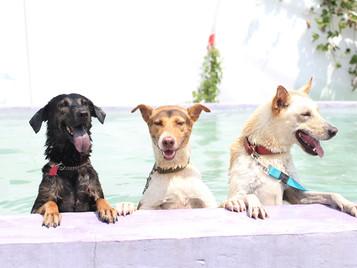 5種方式令狗狗生活更美滿